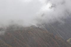 Nebelschwaden …